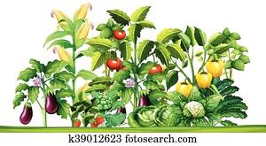 frisches gemüse, betriebe, wachsen, garten