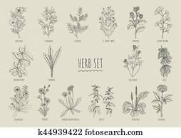 Set of herbs. Collection hand drawn isolated plants. Contour
