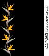 Clipart Oiseau Paradis Fleur K1323042 Recherchez Des Cliparts