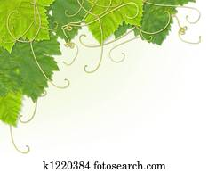 Grape leaf corner