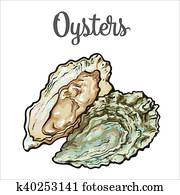 Fresh oyster isolated on a white background