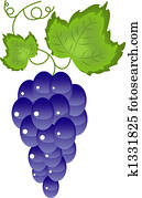 Grapes on the white