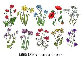 Wild flowers. Meadow plants monkshood thistle poppy. Wildflower vector botanic collection isolated on white background