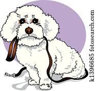 Bichon Frise Poodle Designer Dog