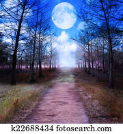 Full Moon And Woods