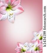 Amaryllis pink flowers Border