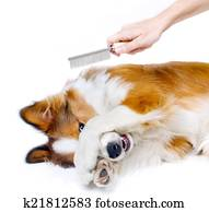 Funny dog showing fear of grooming