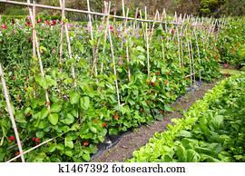 A vegetable garden.
