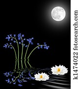 Bluebell and Lily Flowers By Moonlight