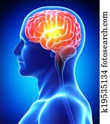 Anatomy of male brain pain