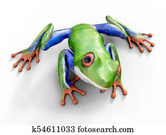 3D rendering of a realistic red-eyed tree frog.