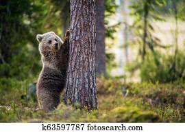 Young Eurasian Brown Bear Wolf Standing Shore Images Our Top 59