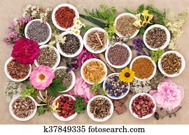 Herbs and Flowers for Healing