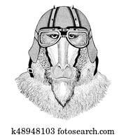 Monkey, baboon, dog-ape, ape wearing biker helmet Animal with motorcycle leather helmet Vintage helmet for bikers Aviator helmet