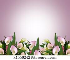 Calla Lilies pink Border