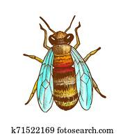 Color Striped Bee Flying Insect Animal Top View