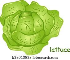 fresh lettuce head