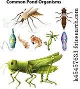 verschieden, arten, von, gemeinsam, teich, organismen