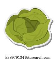 whole lettuce icon