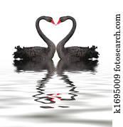 Black Swan Romance
