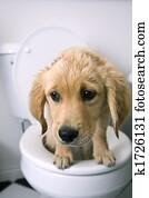 Dog on toilet
