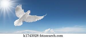 white dove in the sky