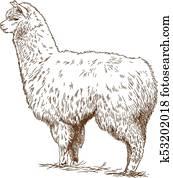 engraving drawing illustration of fluffy llama