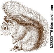 engraving squirrel