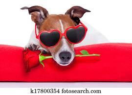 valentines tag, hund
