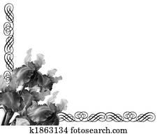 Iris Ornamental Border Black and white