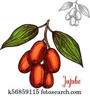 Jujube vector sketch fruit berry icon