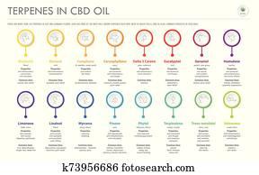 terpenes, in, cbd, oel, mit, strukturell, formeln, horizontaler, geschaefts, infographic