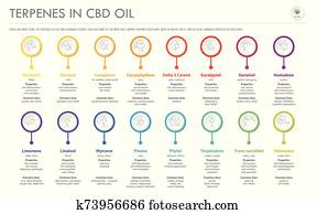 Terpenes in CBD Oil with Structural Formulas horizontal business infographic