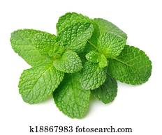 Fresh mint herbs