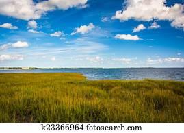 Marsh grasses at the Waterfront Park, in Charleston, South Carol