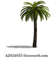3D Render of a palm tree