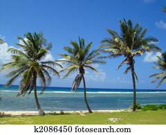 Grand Cayman Paradise