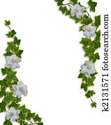 Floral Border Ivy and Gardenias
