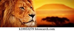 Lion portrait on savanna. Safari