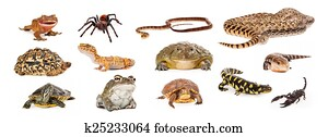 Group of Exotic Pets