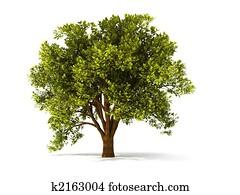 3d summerl tree
