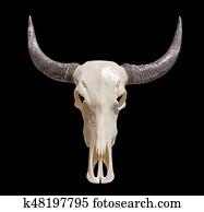Mで始まるツノがある牛のような動物の名前 -子供 …