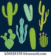 Various Cactus Plant Designs
