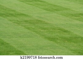Striped grass
