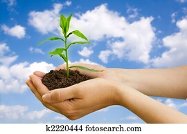 agriculture. plant in a hand