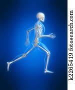 running skeleton