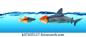 Disguise Between Shark And Goldfish