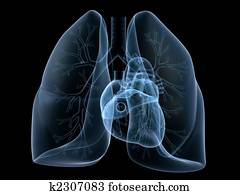 x-ray heart and lung