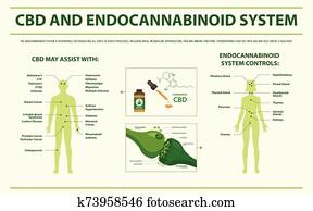 cbd, und, endocannabinoid, system, horizontaler, infographic