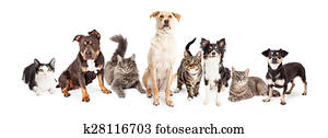 Large Group of Cats and Dogs Together
